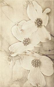 Cersanit  Tuti  Beige Inserto  Flower Csempe 25X40